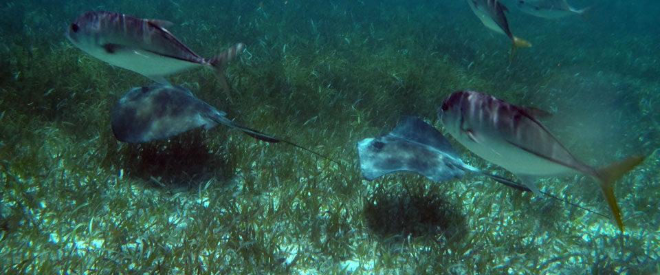 Belize Snorkeling Coral Gardens